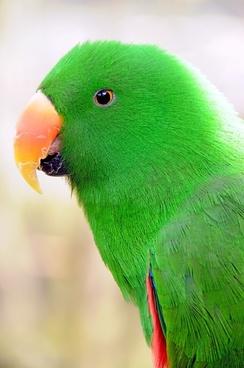 parrot_birds_parakeet_240768